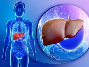 Novo tratamento do câncer hepático, com aumento de sobrevida, é apresentado por médico da Universidade do Porto no Instituto Hemomed