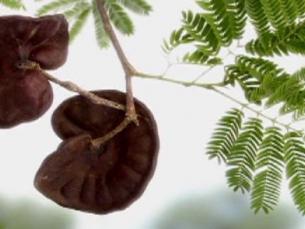 Proteína de planta brasileira inibe progressão do câncer de mama triplo-negativo